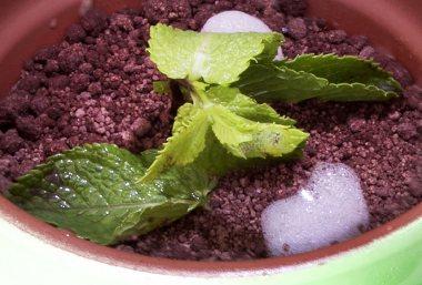 Maceta de crema con manzana y tierra de chocolate